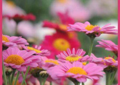 Beet-u-Balkonpflanzen