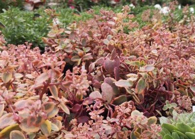 Herbstbepflanzung